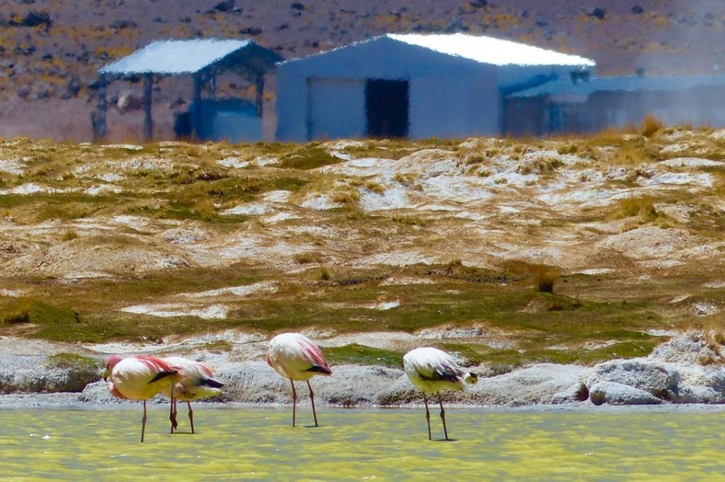 7.-ATxikon_flamingo